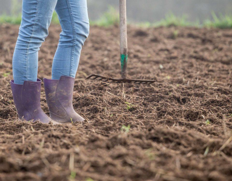 Preparando las tierras de los campos de Trigo y Limpio